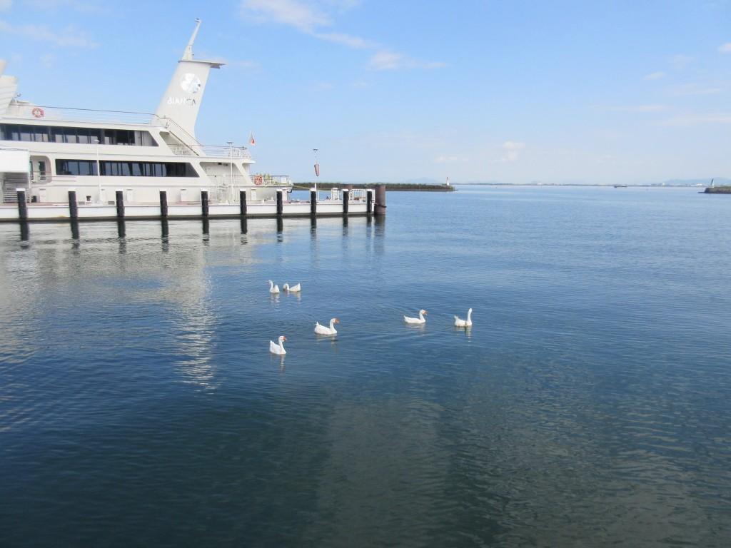 琵琶湖の様子