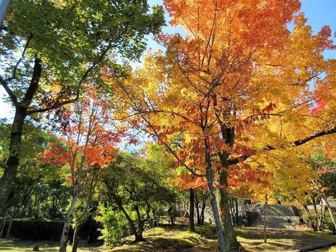 皇子が丘公園の紅葉